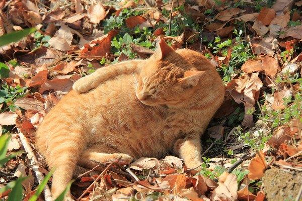 木の葉と猫