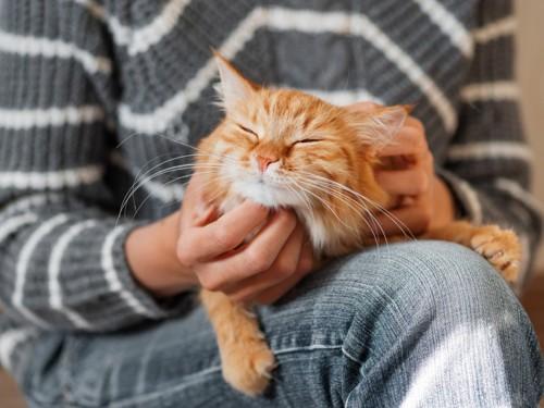 飼い主に抱かれている猫