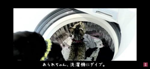 洗濯機にダイブする猫
