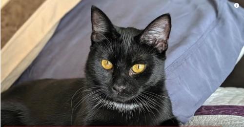 くつろいだ姿勢の黒猫