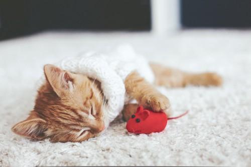 おもちゃと寝る猫