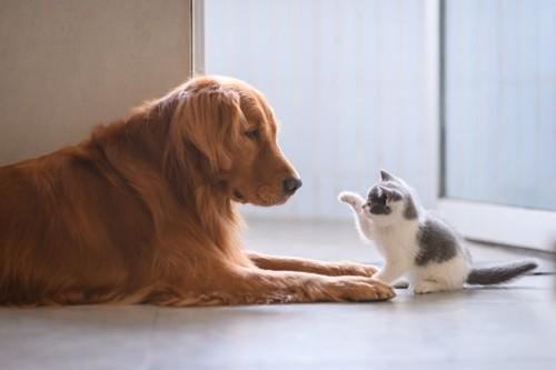 犬に猫パンチしようとする猫