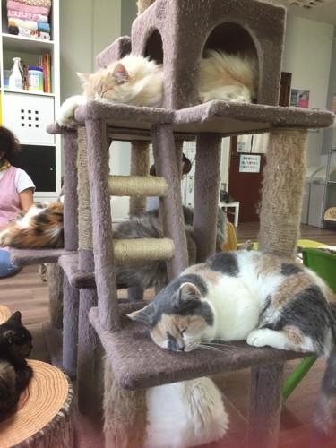 店内に設置された猫タワーでくつろぐ猫たち