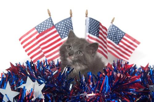 アメリカ国旗と子猫
