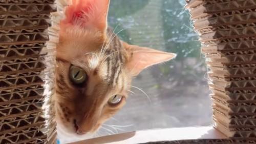 塔の窓をのぞく猫