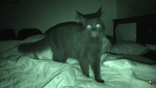 ママを探す猫