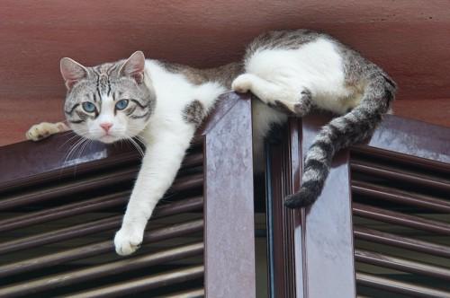 部屋の扉の上に乗って落ちそうな猫