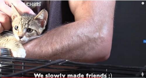 男性に抱っこされる子猫