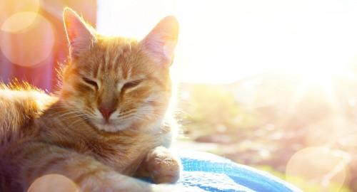 日光の中の猫