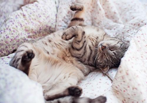 布団の上でひっくり返る猫