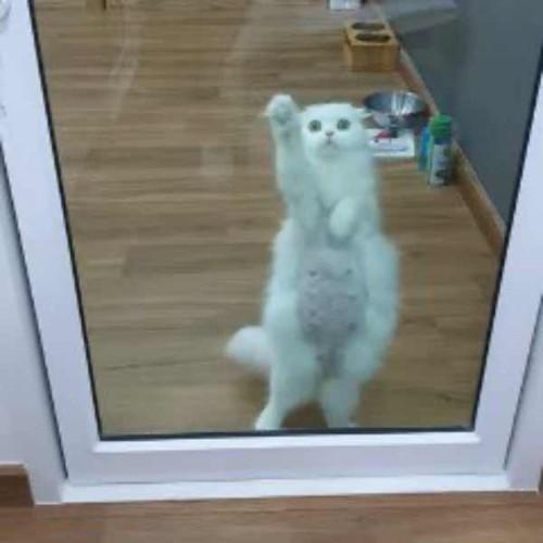 ガラスをひっかく猫