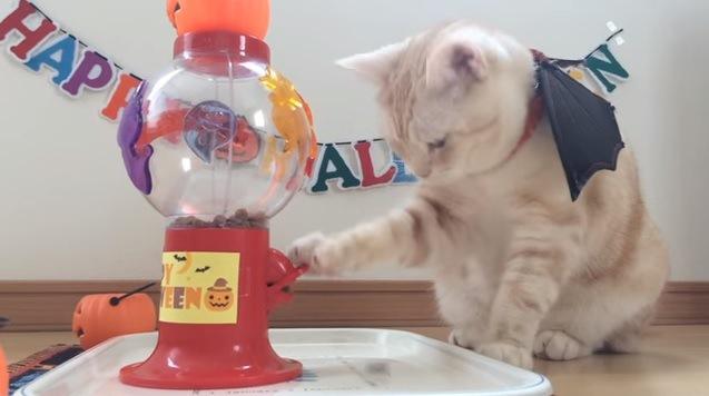 レバーに手をかける猫