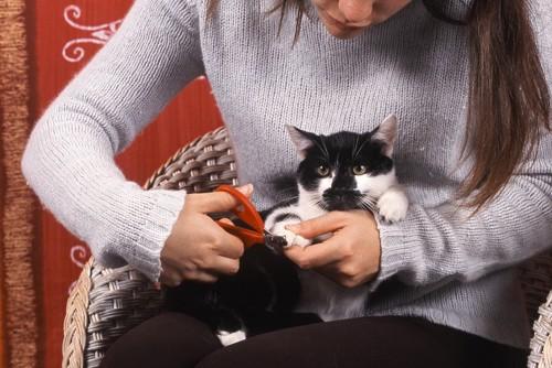 爪切りされている白黒の猫