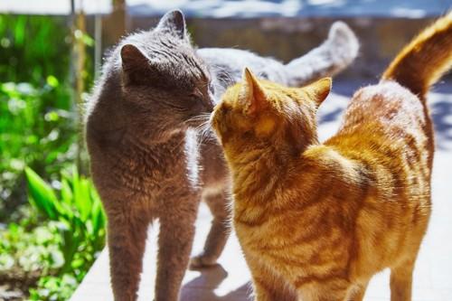猫の鼻チュー