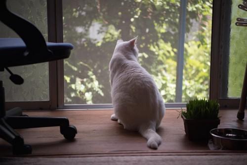 縁側のサッシから外を見る猫の後ろ姿