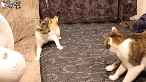 大人の猫を警戒する子猫