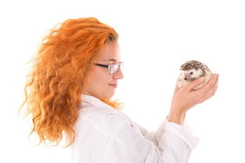 獣医とハリネズミ