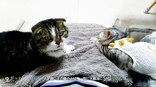 人の膝の上にいる2匹の猫