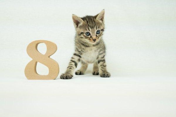 「8」の置物と子猫