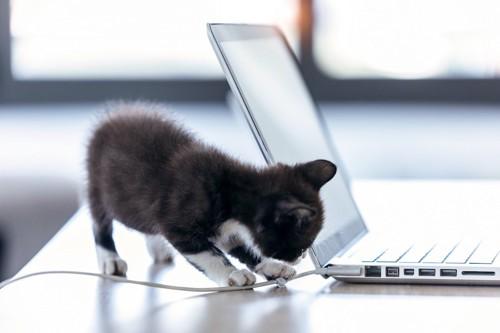 パソコンのコードにじゃれる子猫
