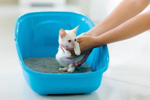 トイレの中で抱きかかえられている白い子猫