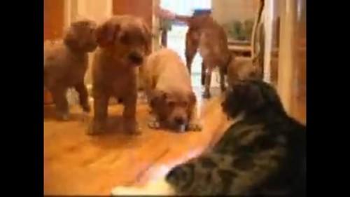 猫が怖い犬たち