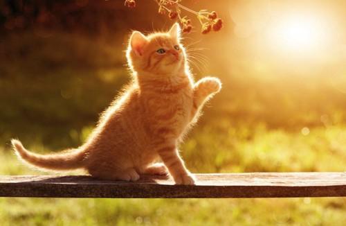 お日様の光を浴びる猫