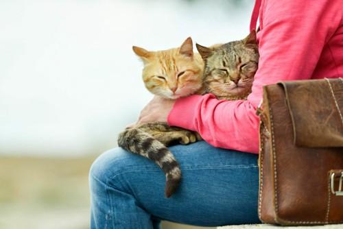 膝の上に乗る2匹の猫