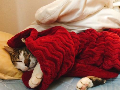 お布団に包まれてゴロゴロする猫