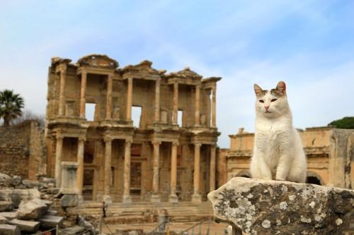 世界遺産と猫