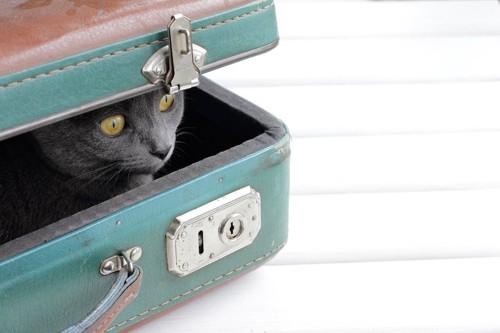 旅行カバンの中から顔を出す猫