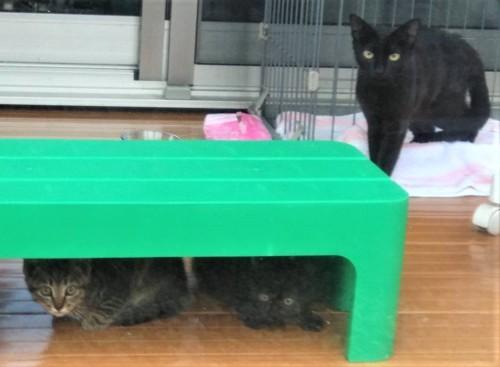 保護されたばかりの野良猫家族