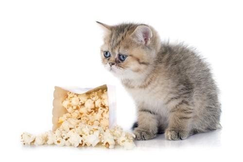 ポップコーンと猫