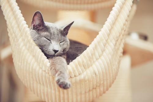 ハンモックに入り眠る猫