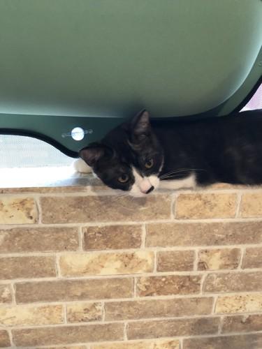 窓際の猫(1匹)