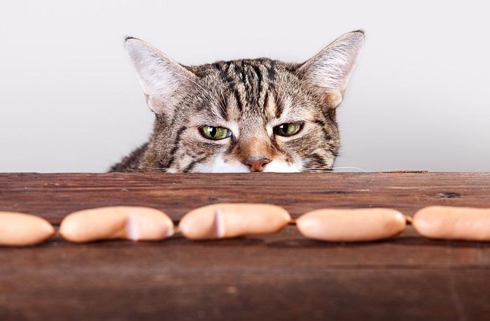 ソーセージを疑い深く見る猫
