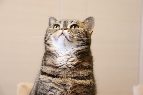 猫の上半身