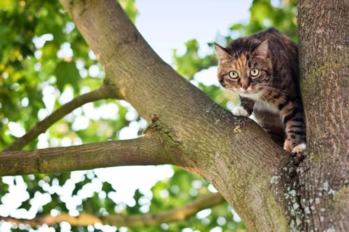 木に登り枝の間にいる猫
