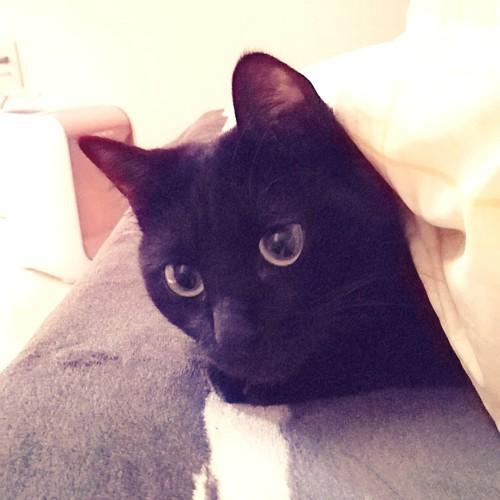 布団から覗く猫