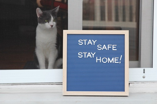 stay home している猫