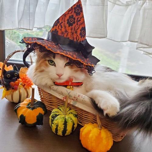 ハロウィンカゴに入った猫