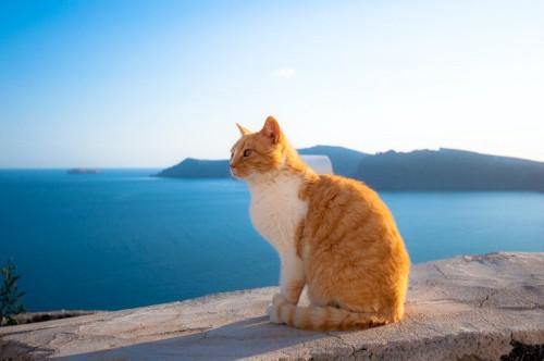 海を見つめる猫