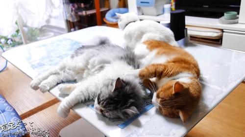 並んで寝そべる猫