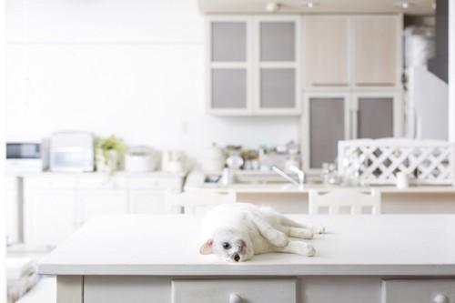 キッチンのテーブルの上で寝る猫