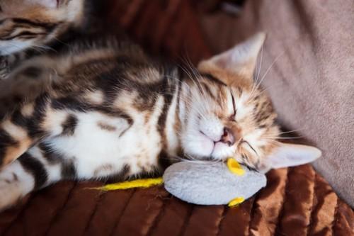 ねずみのおもちゃを枕に寝る子猫