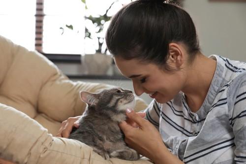 顔を人にくっつける猫