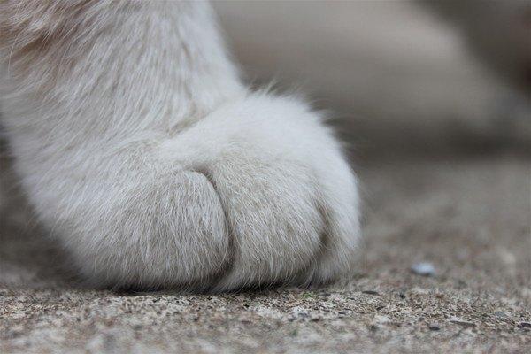 横からの猫の手のアップ