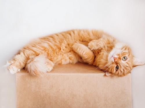毛を立てた猫
