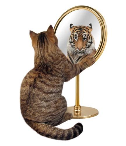 猫が鏡を見ると虎の顔がうつる