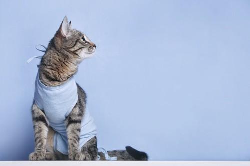 術後服を着て横を向いている猫